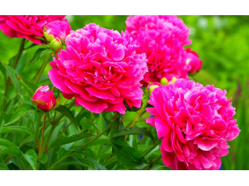 Какие выбрать Цветы на 1 сентября