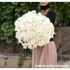 Букет их хризантемы  Фото 1