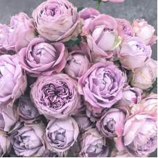 Роза кустовая Блоссом Бабблз