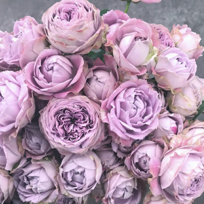Роза кустовая Блоссом Бабблз Фото 1