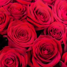 Роза Ред Наоми  Фото 1