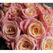 Роза Мисс Пигги Фото 1