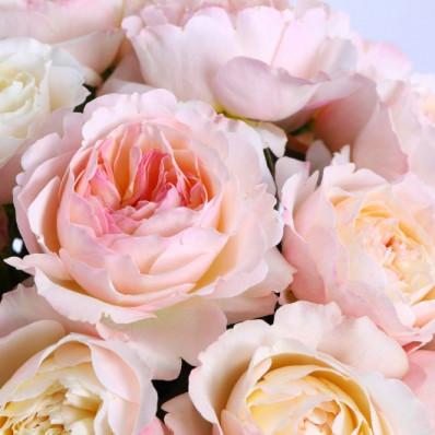 Роза Дэвида Остина Джульетта  Фото 1