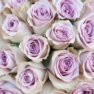 Роза Мемори Лэйн Фото 1