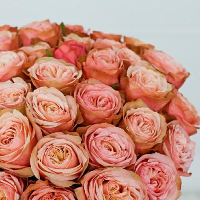 Роза Кахала Фото 1