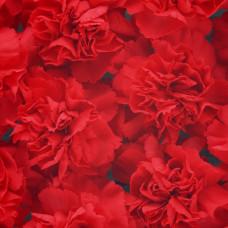 Гвоздика красная Фото 1