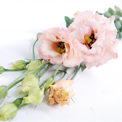Эустома Алиса Пинк нежно-розовая  Фото 1