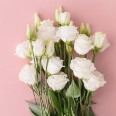 Эустома Розита белая