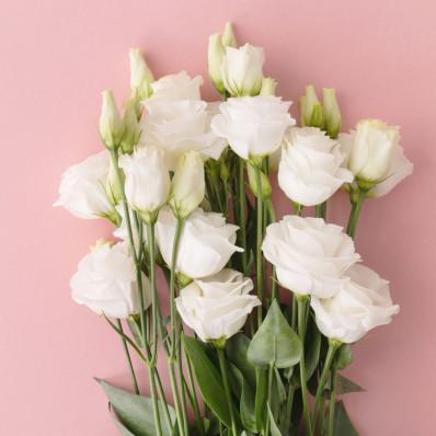 Эустома Розита белая  Фото 1