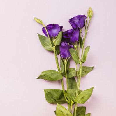 Эустома Розита синяя Фото 1