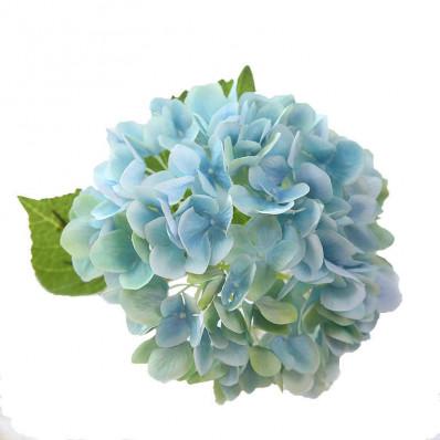 Гортензия Bicolor  бледно двухцветная  Фото 1