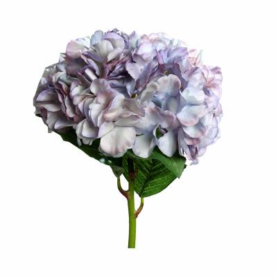 Гортензия Bicolor  двухцветная Фото 1