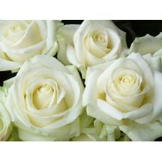 Роза  60см Фото 2