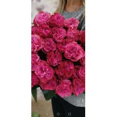 Элитные пионовидные розы Country Bluz Фото 2