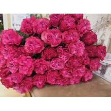 Элитные пионовидные розы Country Bluz Фото 1