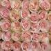 Роза Кения 45 см Фото 3